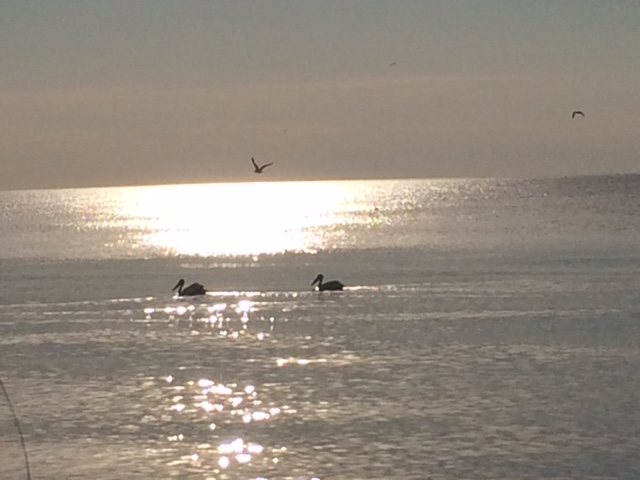 Pelicans on Lake Michigan near Kewaunee, Wisconsin.